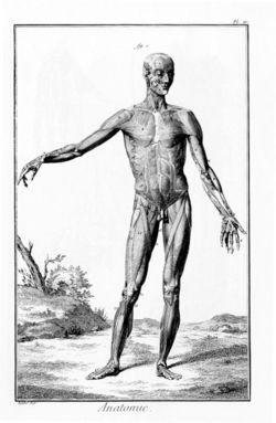anatomi-otot-manusia-wikipedia.jpg