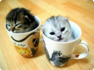 Along Balik Kucing Karena Njangka « DjunDiBlog